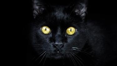 Black Cat Leo Derocia Mets Dugout Daily News