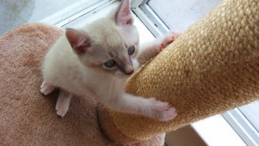 Comportamento e comunicazione del gatto centro miciolandia - Pipi sul divano ...